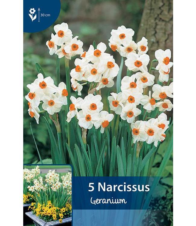 Narzissen Geranium