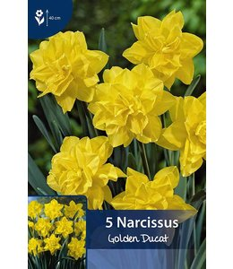 Narcissus Golden Ducat