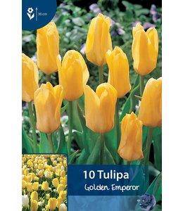 Tulip Golden Emperor