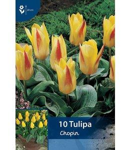 Tulp Chopin