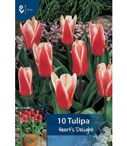 Tulip Heart's Delight
