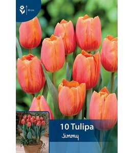 Tulip Jimmy