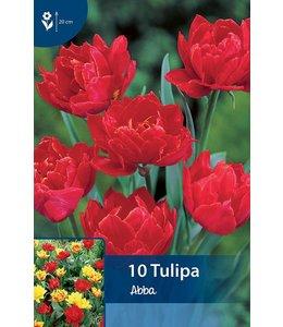 Tulip Abba