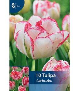 Tulp Cartouche