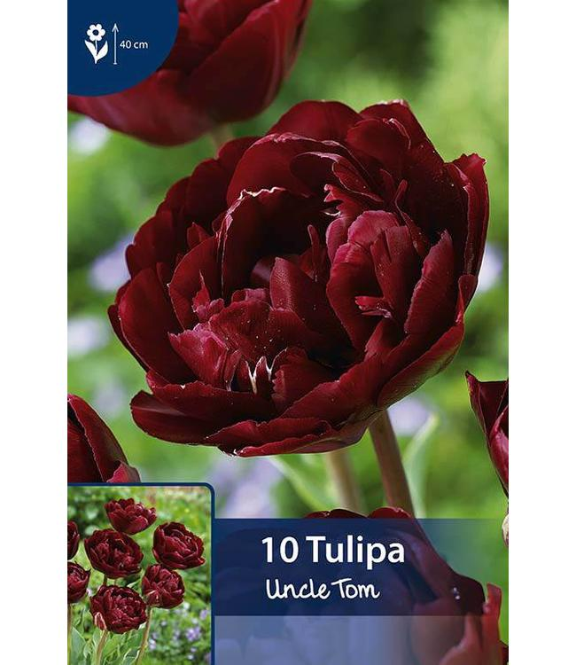 Tulp Uncle Tom