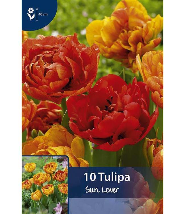Tulpen Sun Lover