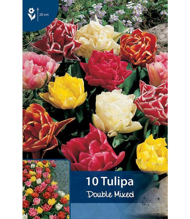 Tulpen Dubbel gemengd