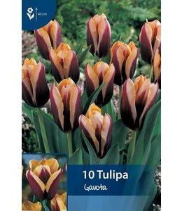 Tulip Gavota