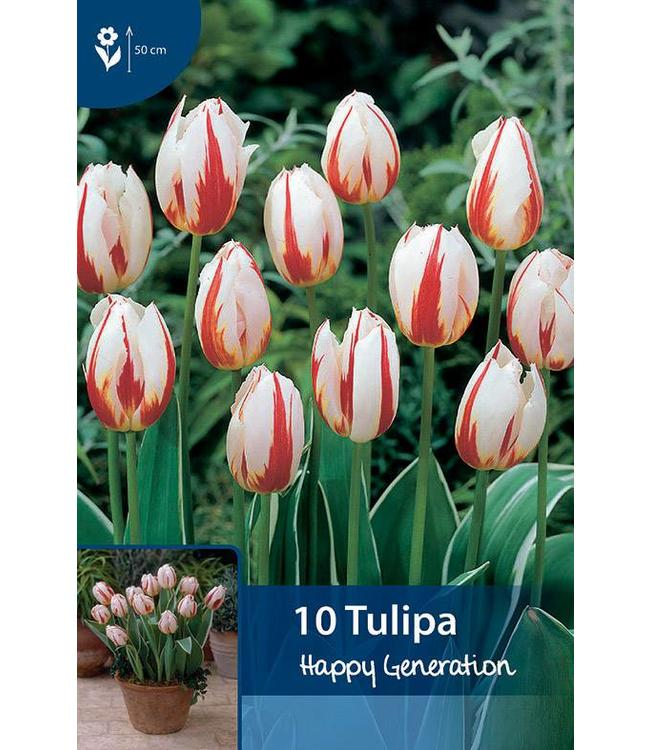 Tulp Happy Generation