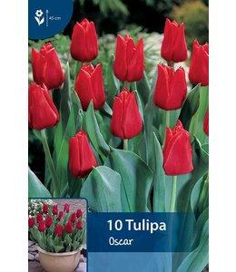 Tulip Oscar
