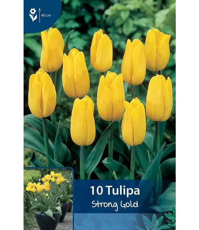 Tulpen Strong Gold