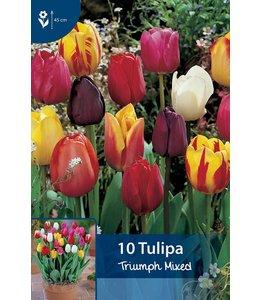 Tulp Triumph Gemengd