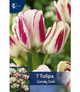 Tulip Candy Club