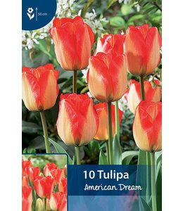 Tulp American Dream