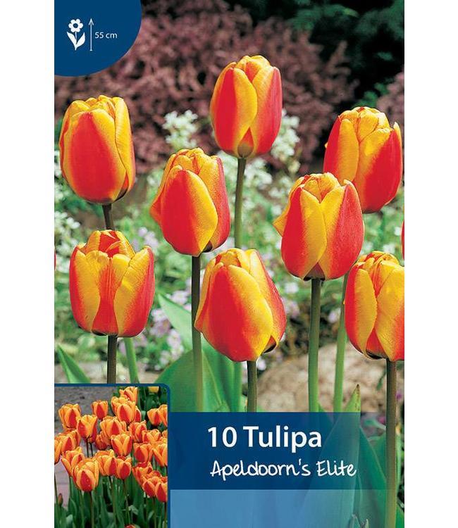 Tulpen Apeldoorn's Elite
