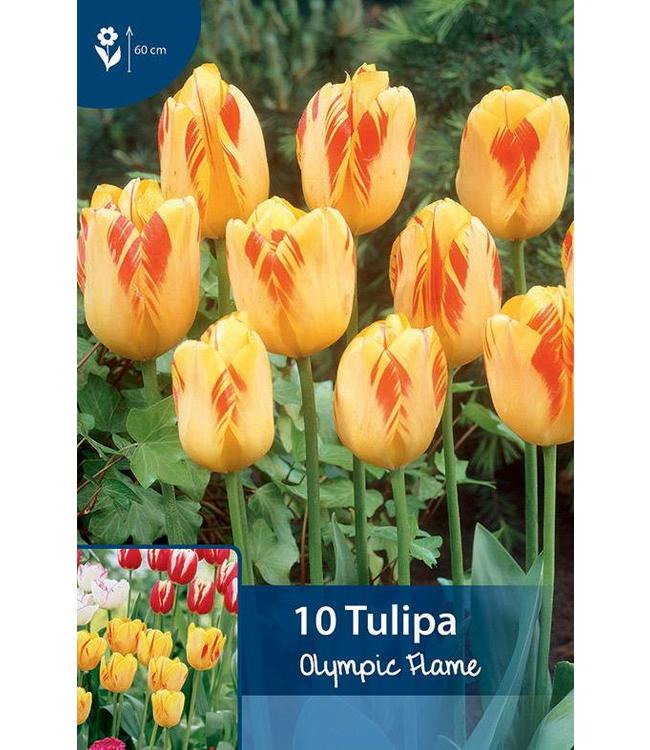 Tulp Olympic Flame
