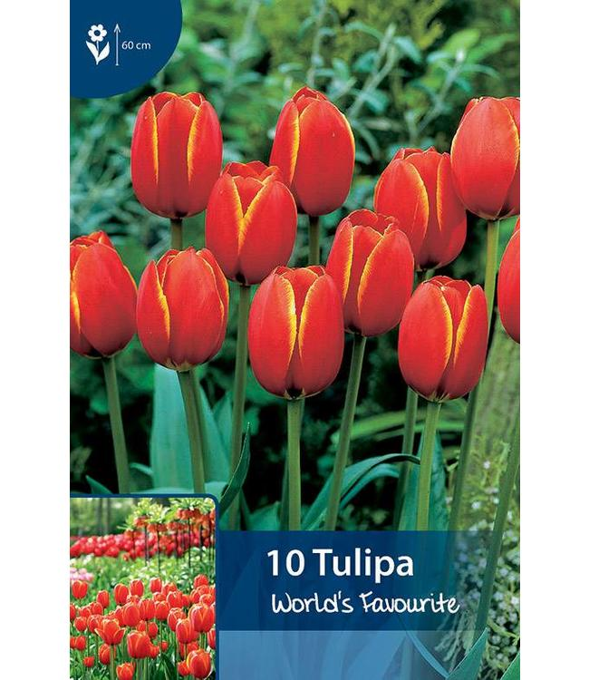 Tulpen World's Favourite