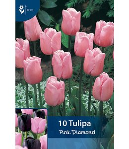 Tulpen Pink Diamond