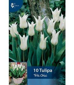 Tulip Très Chic