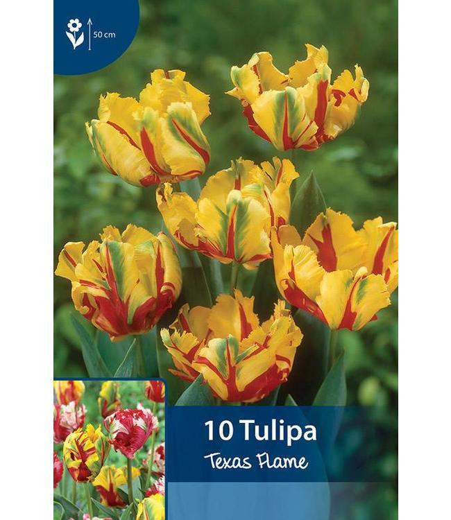 Tulp Texas Flame