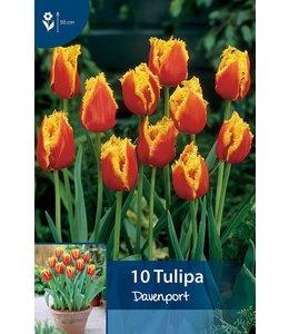 Tulip Davenport
