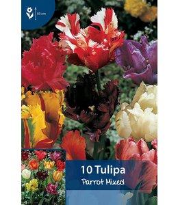 Tulpen Parrot Mischung