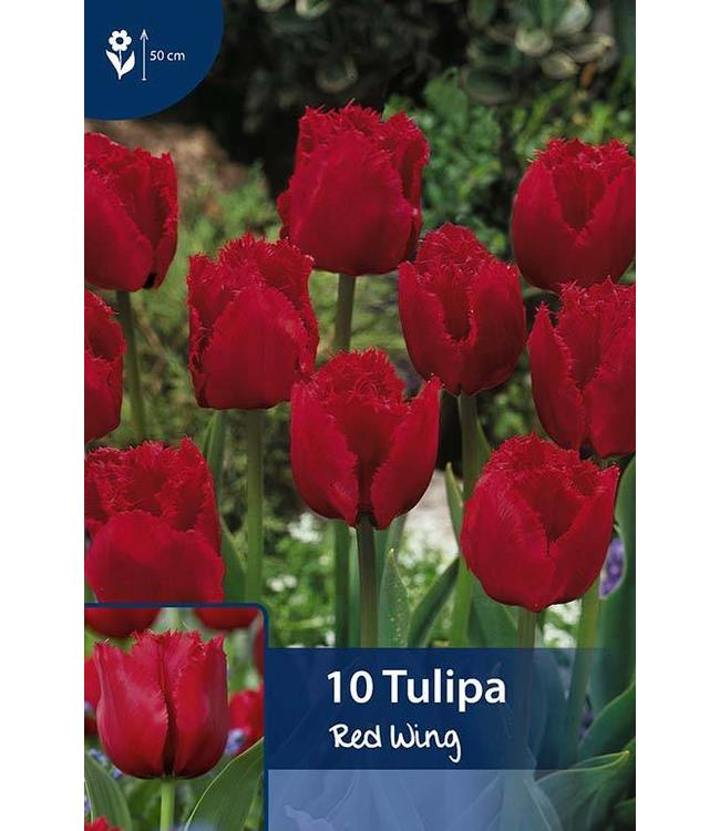 Tulp Red Wing