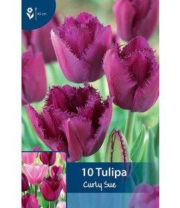 Tulpen Curly Sue
