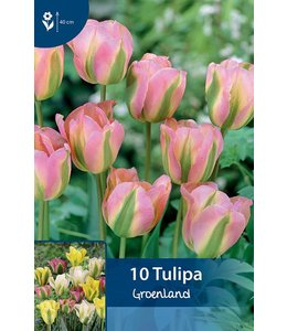 Tulp Groenland