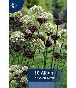 Allium Passion Mischung