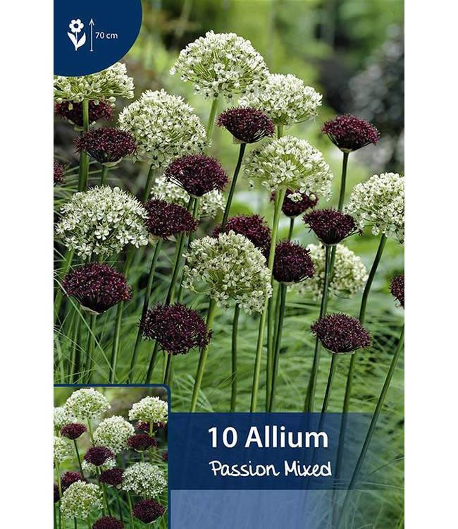Allium Passion Mixed