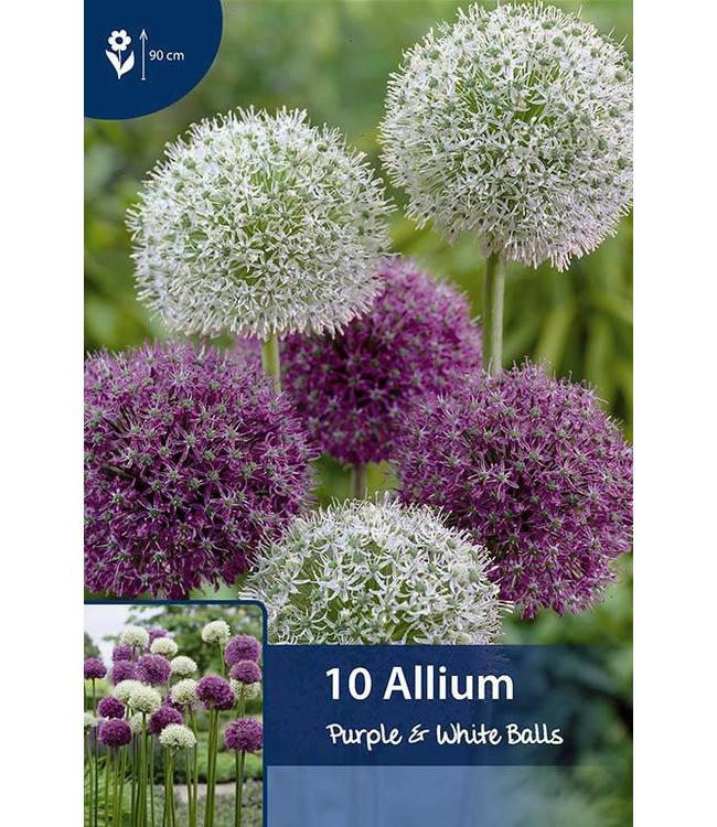 Allium Purple & White Balls