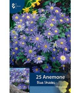 Anemonen Blue Shades