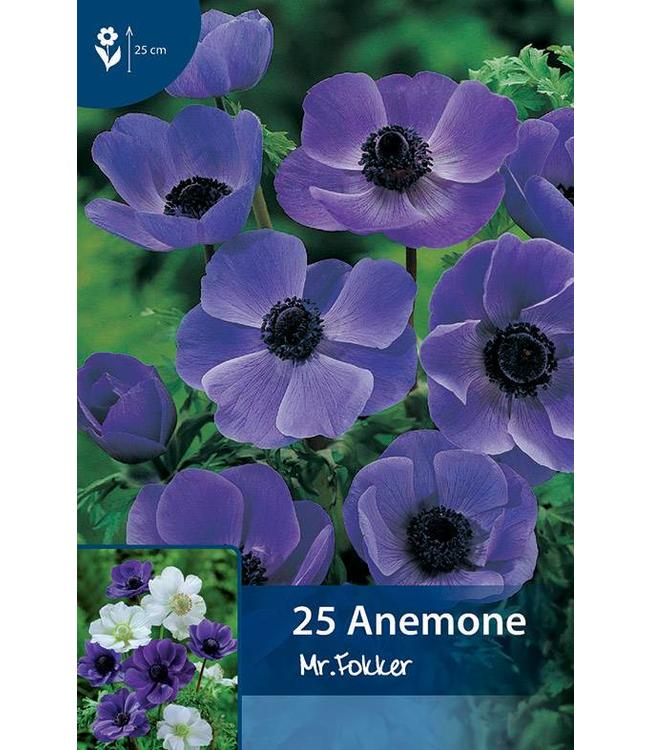 Anemone Mr.Fokker