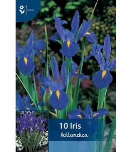 Iris Hollandica Blauw