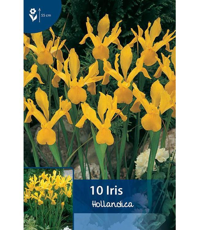Iris Hollandica Gelb