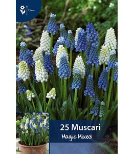 Muscari Magic MIschung