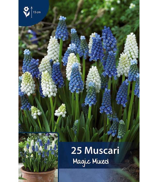 Muscari Magic Mixed