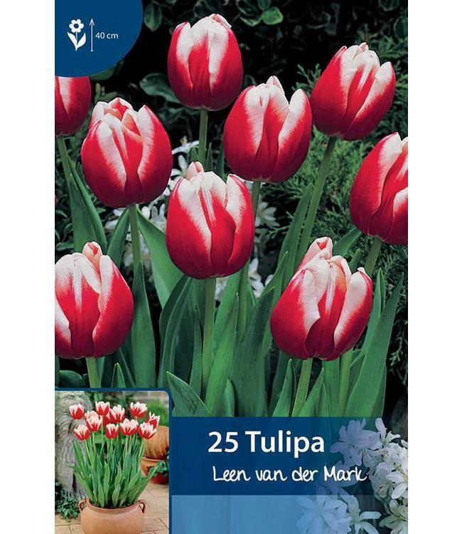 Tulpen Leen van der Mark