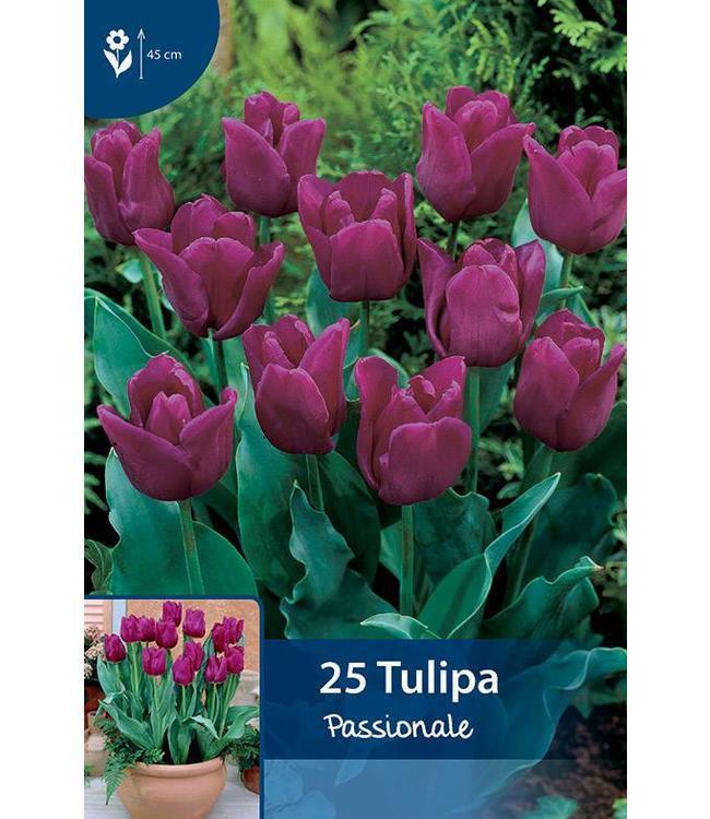 Tulpen Passionale