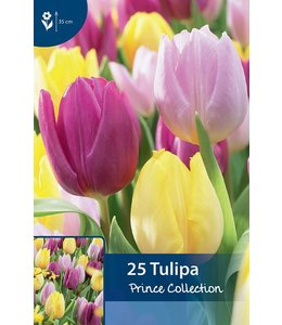 Tulp Prince Collection