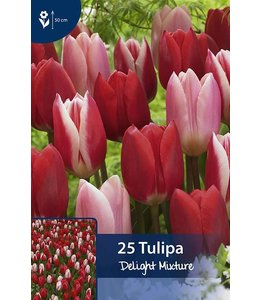 Tulpen Delight Mischung