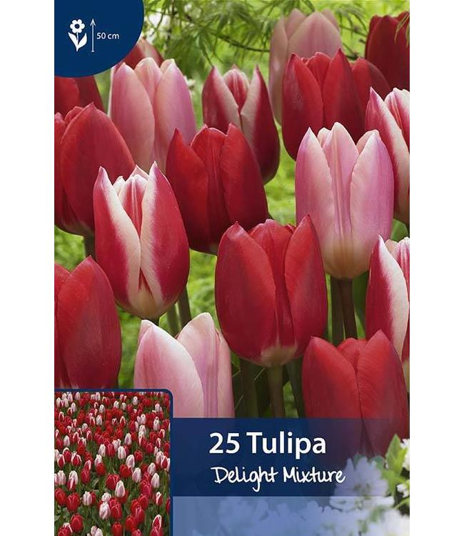 Tulp Delight Mixture