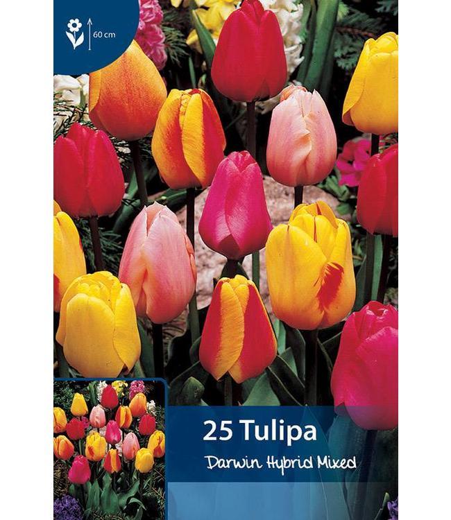 Tulp Darwin Hybride Gemengd