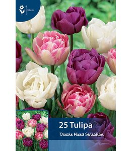 Tulp Double Mixed Sensation
