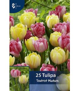 Tulip Foxtrot Mixture