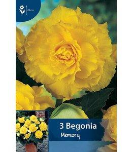 Begonia Gefüllte Gelb