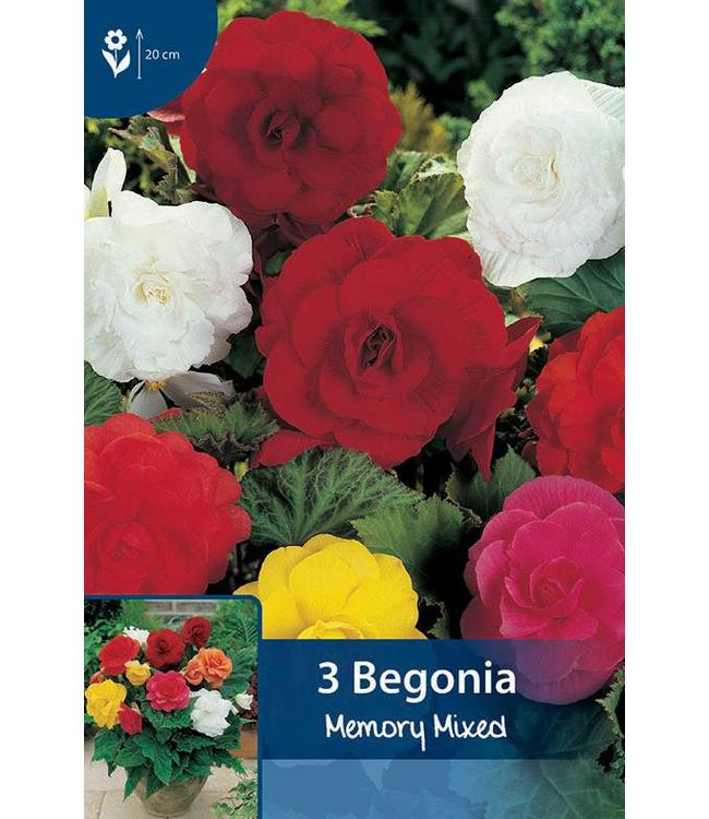 Begonia Double Mixed