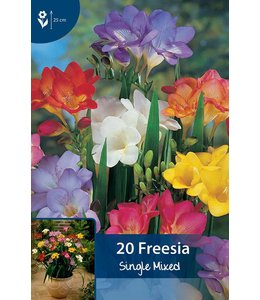 Freesia Single Mixed