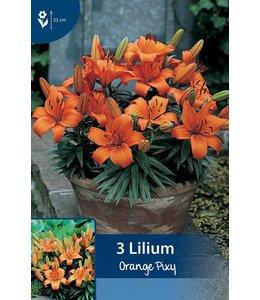 Lily Orange Pixy
